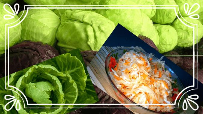Квашеная капуста - как есть для похудения, польза и вред такой диеты, рецепты для кожи