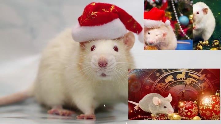 Как встречать 2020 год крысы, что должно быть на столе, традиции, приметы