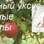 Яблочный уксус применение в народной медицине ― что Вам надо знать