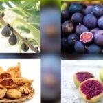 Инжир свежий: какую пользу или вред принесет винная ягода, сколько и как можно его есть