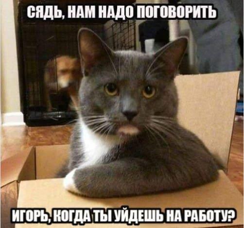 как извиниться перед кошкой