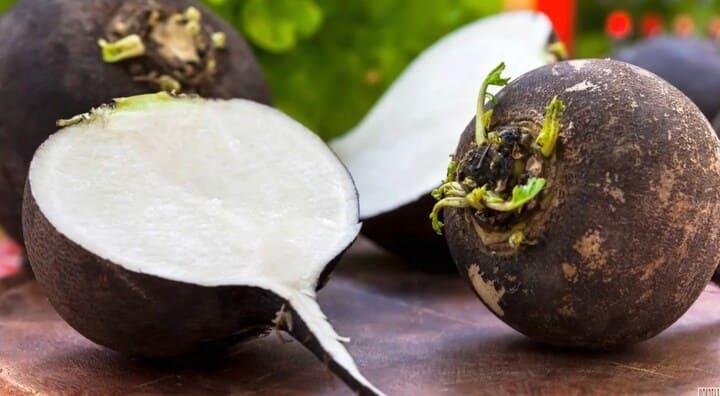 Черная редька Польза и вред для организма человека Рецепты приготовления Польза продукта для организма женщины