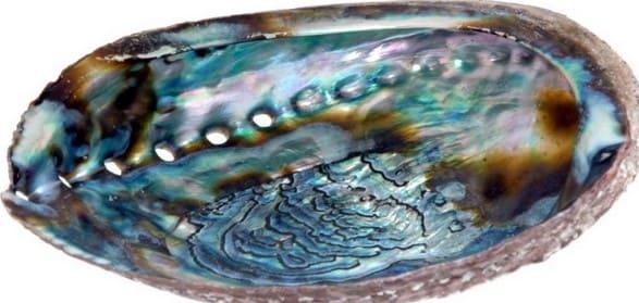 Гелиотис камень Свойства минерала морские ушки